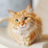 猫を飼いたくても猫アレルギーだからと諦める人より、アレルギーでも好きだと言って飼う人の方が多い?